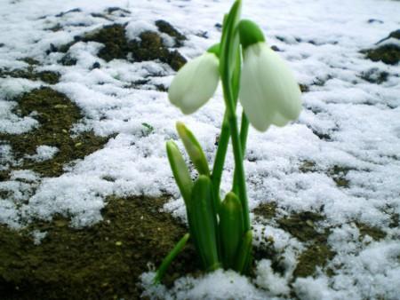 Картинки весны - 2