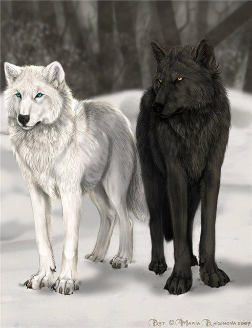 В потдержку армянским волкам